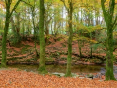 20161031_tullymore_forest_0021