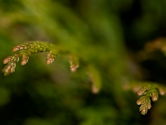 20180407_plants_from_above_thuje_1